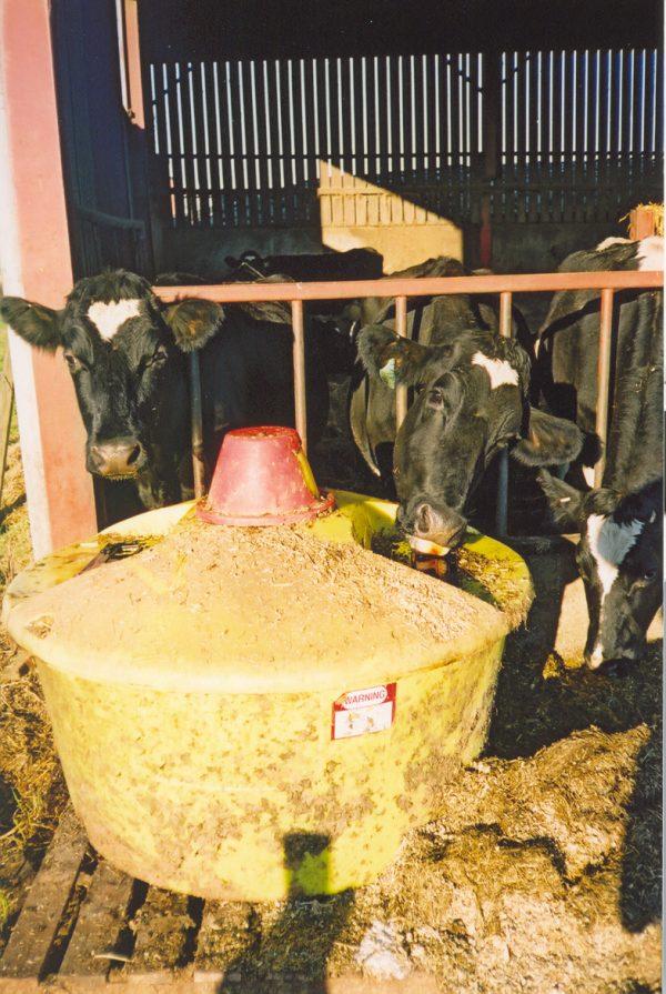 Cow licktank.