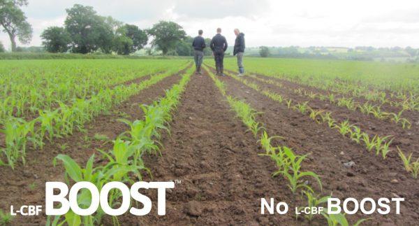 Organic carbon based fertiliser.