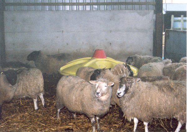 Sheep lick tank