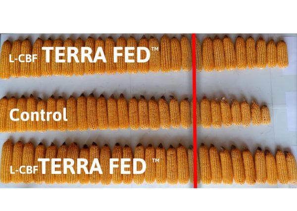 TERRA FED Organic carbon based fertiliser